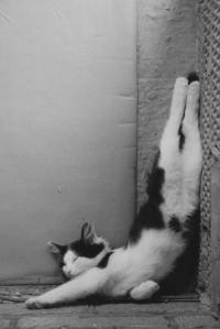 yoga-anyone